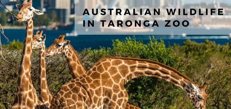 Australian-wildlife-in-Taronga-Zoo