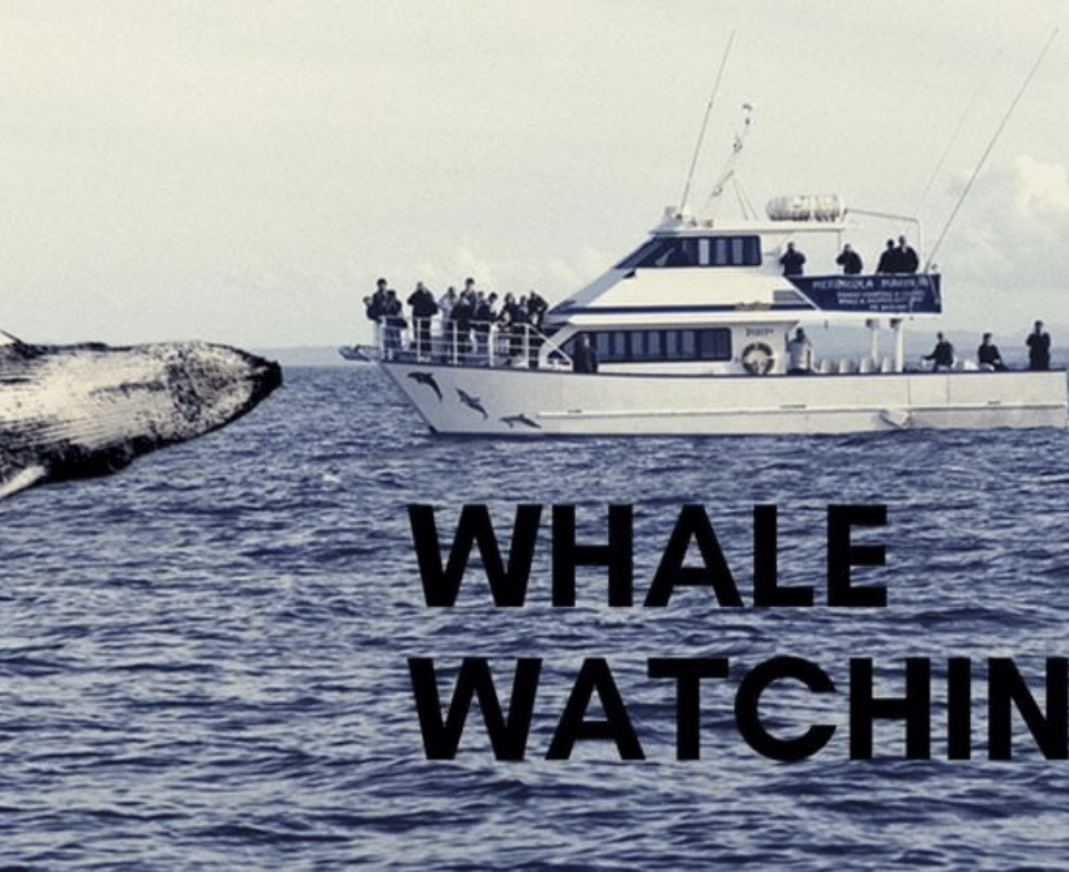 Whale watching Ferries Transport Double Bay Sydney - The Savoy Hotel
