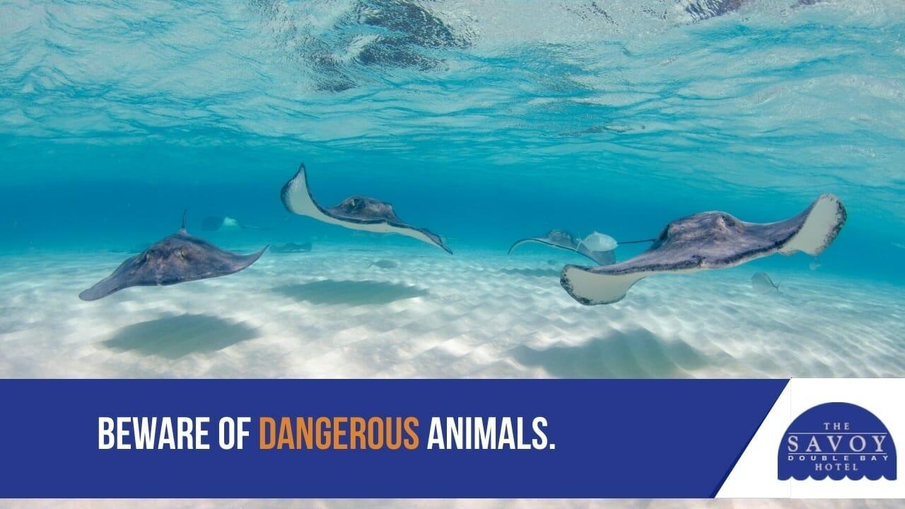 Beware of dangerous animals.