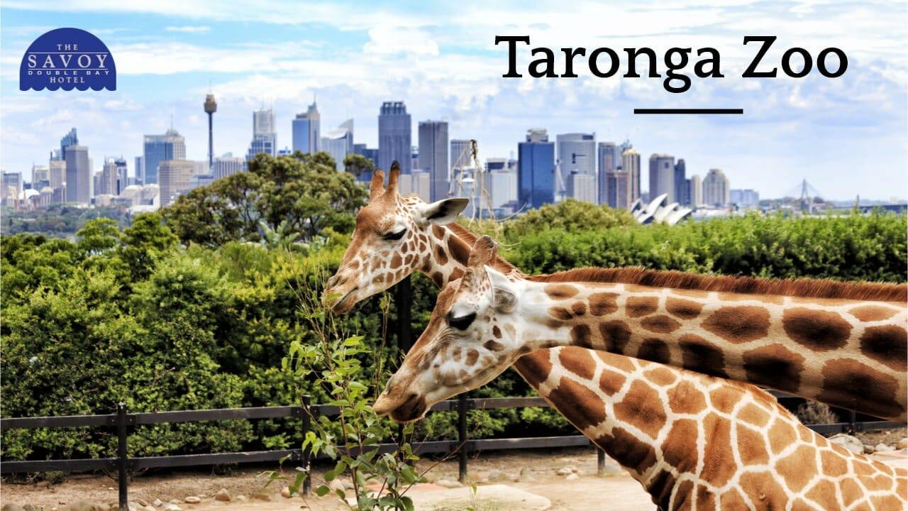 10 Best Sydney Locations to Visit in Summer - Best Sydney Location