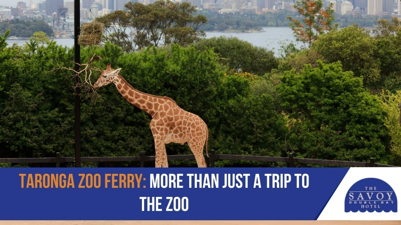 Taronga Zoo Ferry- More Than Just a Trip to the Zoo
